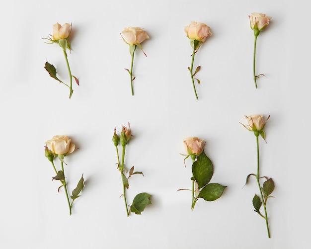 Sammlung geschnittener rosen mit blättern, flach gelegt
