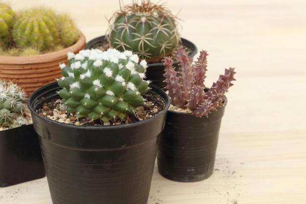 Sammlung kleiner kaktus oder sukkulenten auf hölzernem hintergrund mit kopienraum.