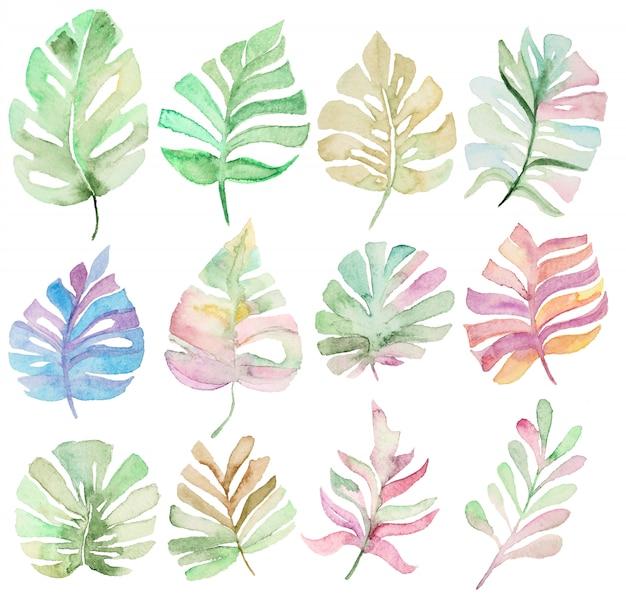 Sammlung palmblätter
