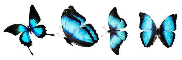 Sammlung tropischer blauer schmetterlinge für design. isoliert auf weißem hintergrund