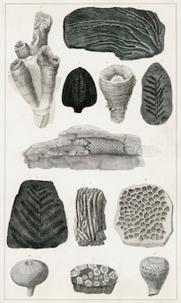 Sammlung verschiedener fossilien aus eine geschichte der erde und animierte natur (1820)