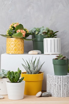 Sammlung verschiedener sukkulenten und pflanzen in farbigen töpfen. topfkaktus und zimmerpflanzen gegen lichtwand. der stilvolle innengarten