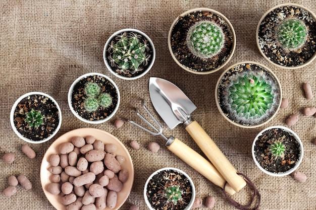 Sammlung von kakteen und sukkulenten in kleinen pappbechern.