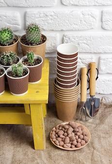 Sammlung von kakteen und sukkulenten in pappbechern auf kleinem gelbem tisch