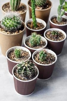 Sammlung von kakteen und sukkulenten in pappbechern