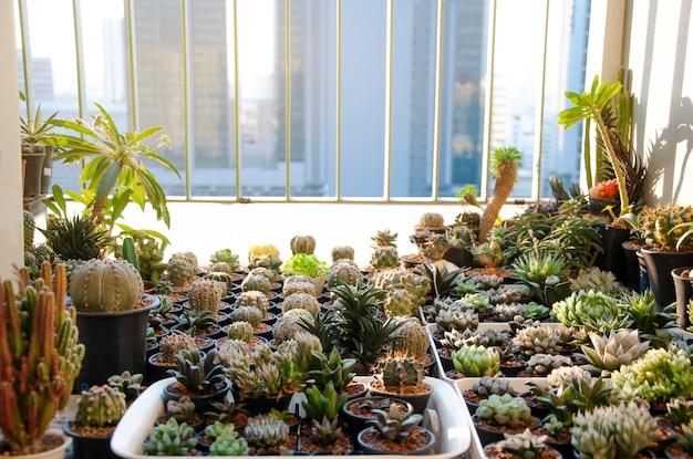 Sammlung von verschiedenen kakteen und saftigen pflanzen im balkonkondominium