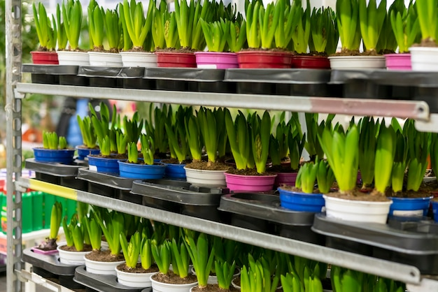 Sammlung von zimmerpflanzen zum verkauf bereit