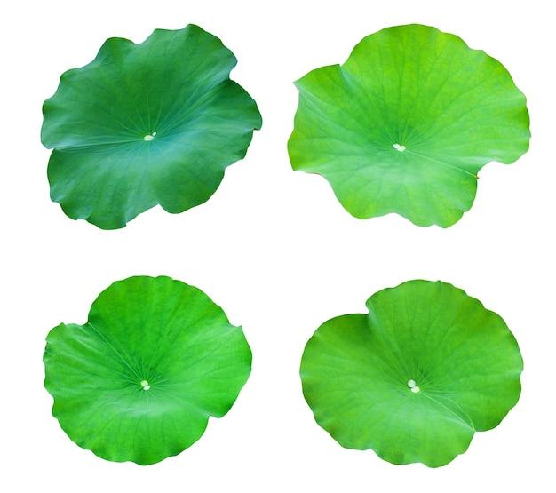 Sammlungen lotusblätter isolieren auf weißem hintergrund. datei enthält mit beschneidungspfad so einfach zu arbeiten.