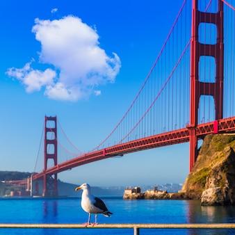 San francisco golden gate bridge-seemöwe kalifornien