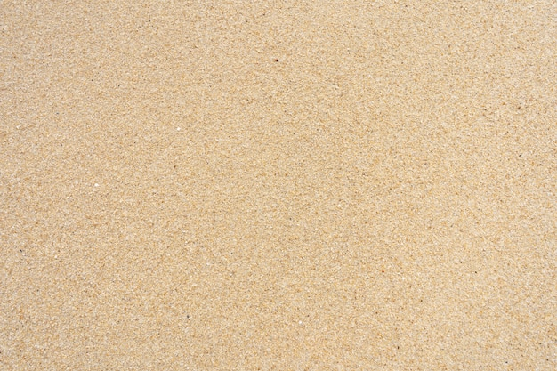 Sand textur am strand. zerkleinerte muscheln