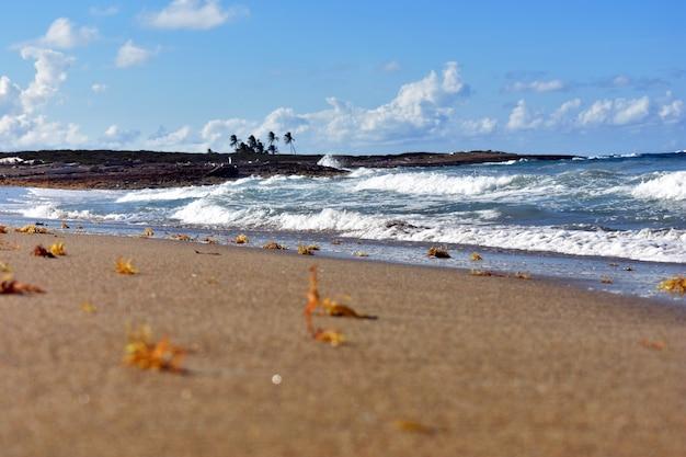 Sandige küste des atlantischen ozeans. dominikanische republik