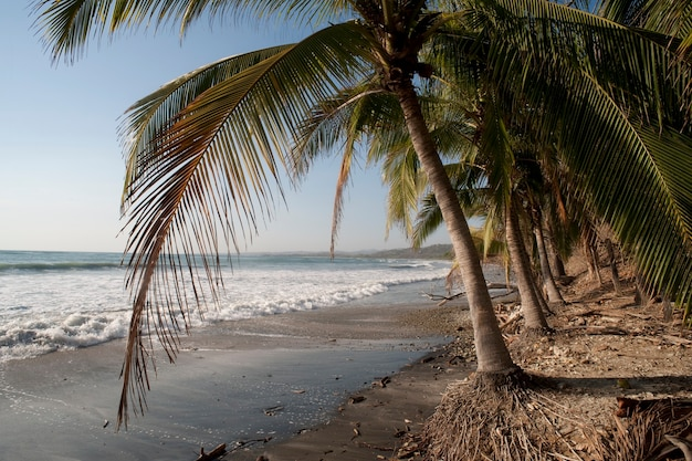 Sandiger strand des pebbles, der über dem glänzenden ozean durch palmenwedel schaut