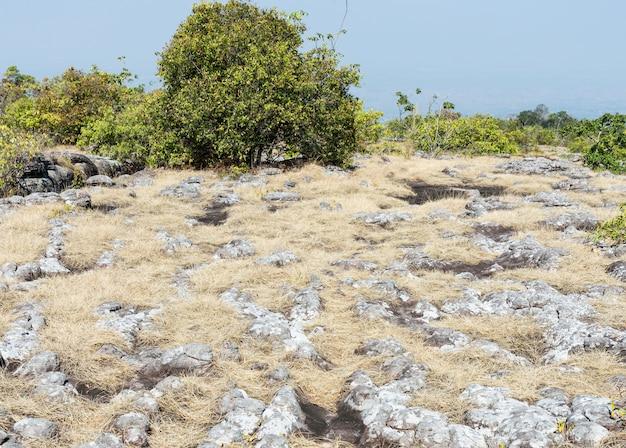 Sandsteinknoten mit trockener rasenfläche.