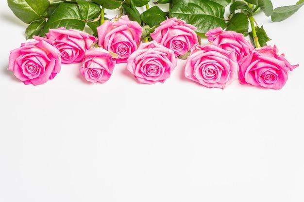 Sanfte rosa rosen isoliert auf weißer oberfläche