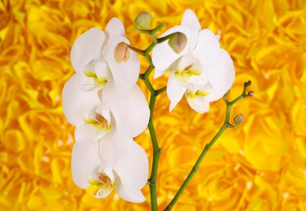 Sanfte schöne orchidee auf gelbem hintergrund