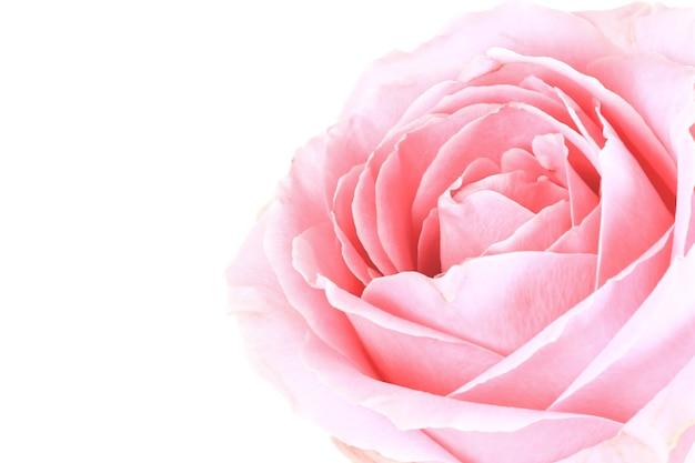Sanfter hintergrund von rosa rose