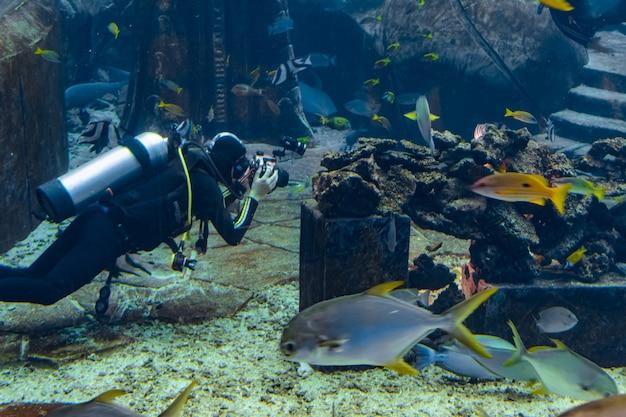 Sanya, hainan, china - 20. februar 2020: unterwasserfotografen beim tauchen im riesigen aquarium. taucher mit kamera umgeben von einer großen anzahl von fischen.