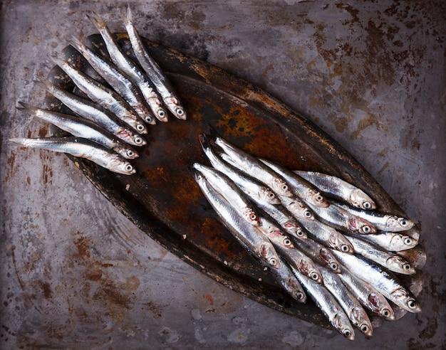 Sardellen-frischer meeresfisch