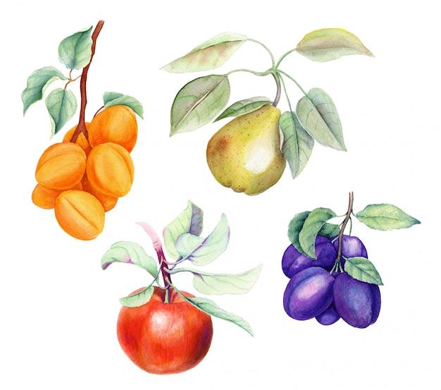 Satz früchte auf einer weinlese-hintergrund-aquarellillustration des weißen hintergrunds