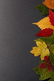 Satz getrockneter blätter unterschiedlicher farbe in der hintergrundtextur des schwarzen steins