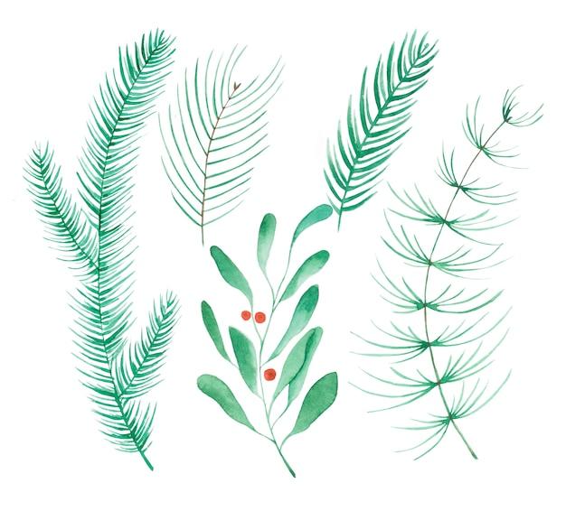 Satz immergrüner nadelbaumzweige lokalisiert auf weißem hintergrund. fichte, kiefer, zypresse, tanne