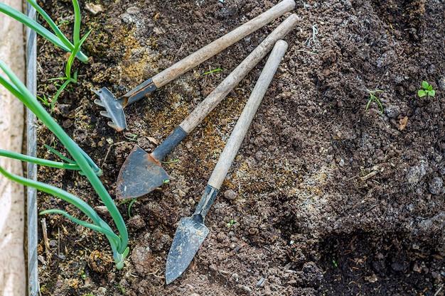 Satz kleiner gartengeräte, die auf sandigem boden unter pflanzen liegen. garten- und blumenzuchtkonzept. selektiver fokus