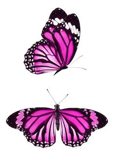 Satz lila schmetterlinge auf einem weißen hintergrund. foto in hoher qualität