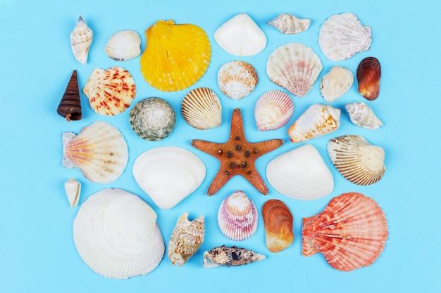 Satz muscheln und starfish auf draufsicht des blauen hintergrundes, ebenenlage