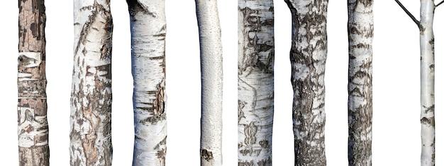 Satz natürliche birkenstämme lokalisiert auf weiß
