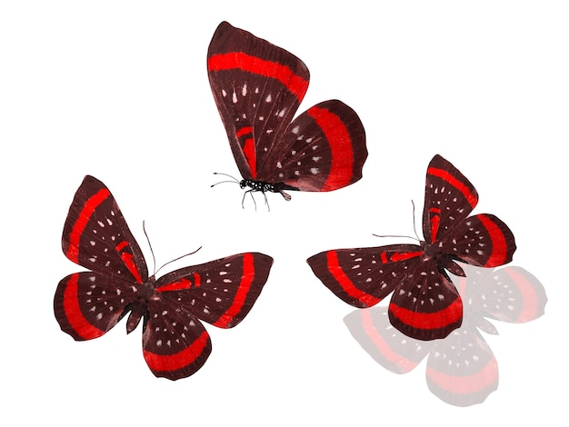 Satz rote schmetterlinge lokalisiert auf einem weißen hintergrund. schwarm farbiger motten. drei tropische insekten. foto in hoher qualität