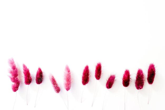 Satz trockener purpurroter wildblumen in einer linie lokalisiert auf weißem hintergrund