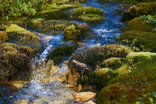 Sauberer gebirgsbach, der zwischen üppigen moosen in nahaufnahme fließt