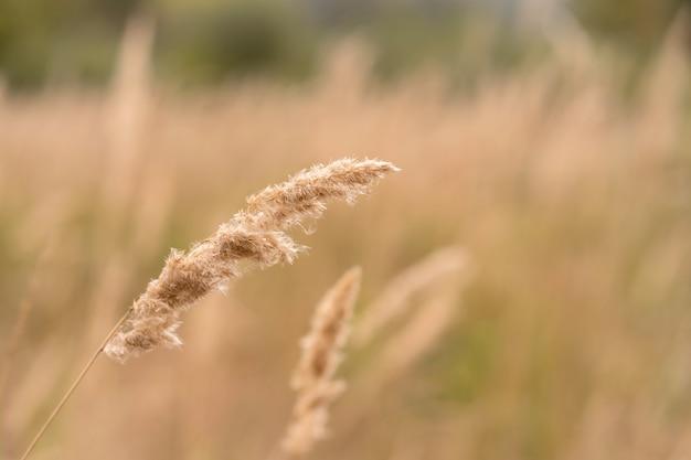 Savannah grass field in der sonnenhintergrundbeleuchtung, funkeln mit sonnenlicht am mittag.