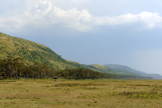 Savannenlandschaft im nationalpark kenias