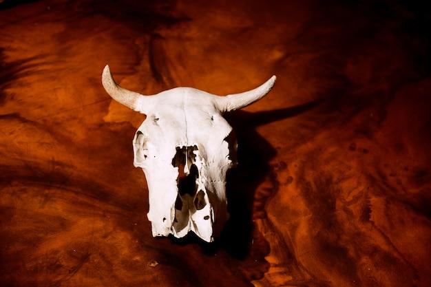 Schädel einer kuh auf einer brennenden roten szene
