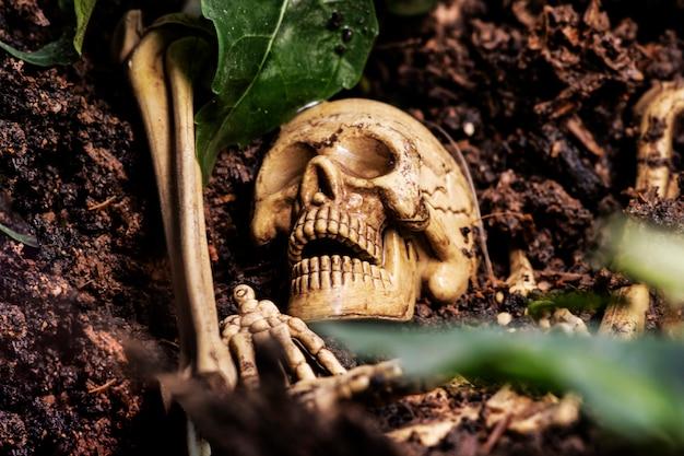 Schädel und skelette knochen in gräber hof gefunden