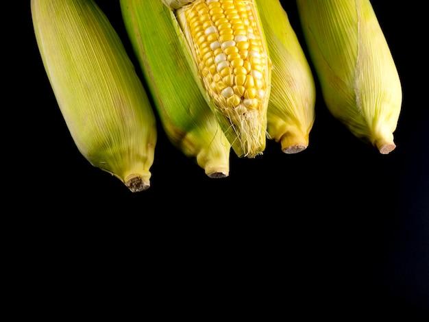 Schälen und enthülsen rohen mais auf schwarzem hintergrund