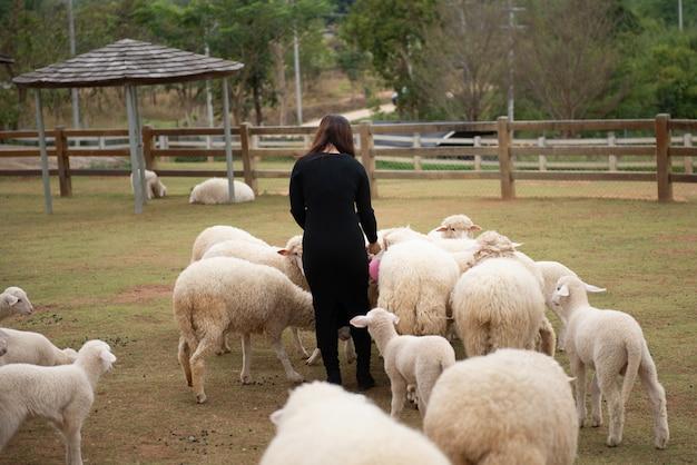 Schafe auf dem hof und haben mitleid