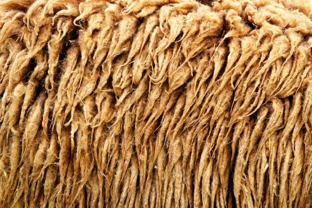 Schafhaar hintergrund und texturen