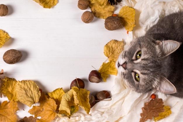 Schal, kastanien, nüsse und trockene blätter und eine katze auf einem holztisch. erwärmender hintergrund des herbstes, copyspace.