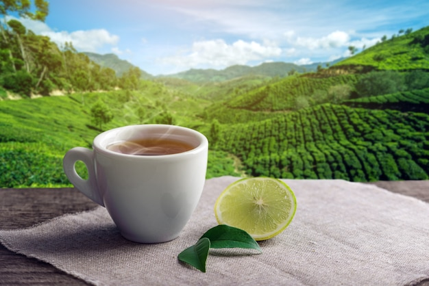 Schale heißer brauner tee mit einem stück zitrone auf dem hintergrund von plantagen.