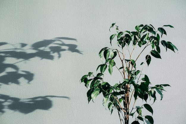 Schatten der blumenhausanlage auf wand tapeziert grauen hintergrund