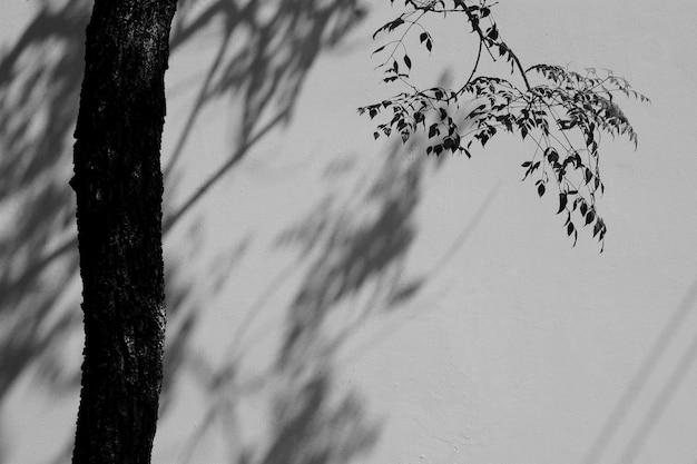 Schatten eines blattes und der niederlassung auf der weißen betonmauer - monochrom
