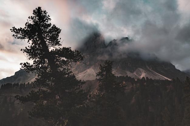 Schattenbild der bäume nahe berg