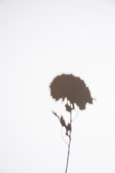 Schattenbild der einzelnen blume auf weißem hintergrund