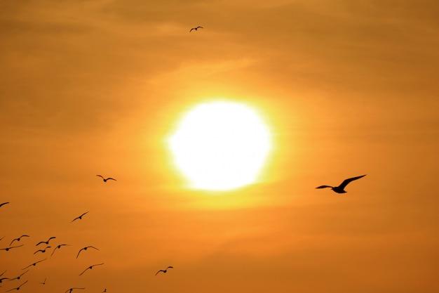 Schattenbild der gruppe seemöwen, die gegen das helle aufgehende sonne fliegen