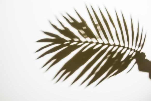 Schattenbild der hand einer person, die palmblatt auf weißem hintergrund hält