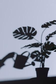 Schattenbild der inneren pflanze an der wand