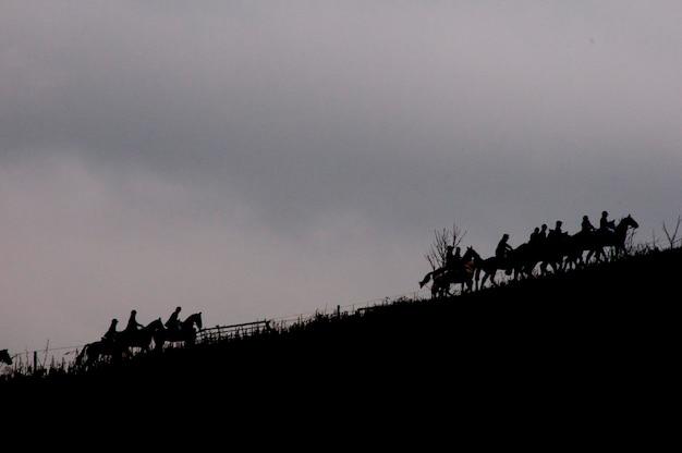 Schattenbild der pferde auf einem gebiet