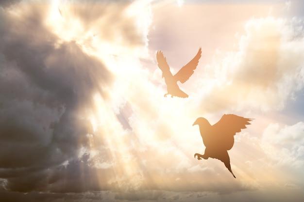 Schattenbild der taube, die mit einem dramatischen himmel fliegt